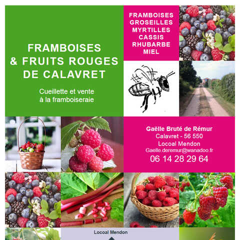 Culture raisonnée en plein champ de Framboises et fruits rouges de Calavret à Locoal Mendon